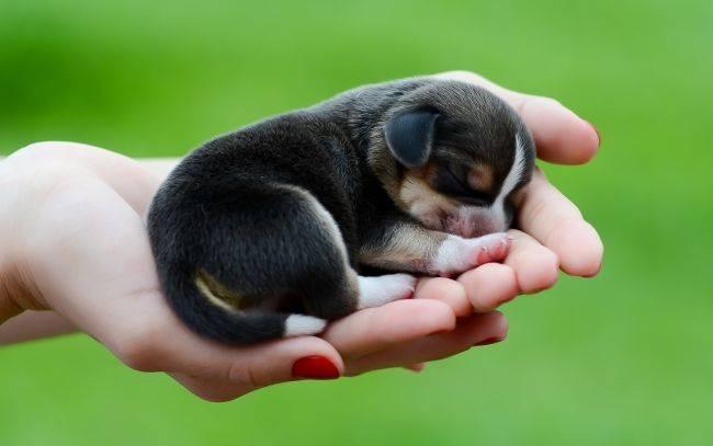 В каком возрасте стерилизовать собаку