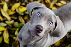 Как собаки видят мир