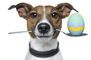 Кастрация собак