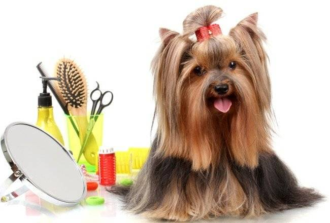 Уход за шерстным покровом собаки