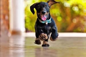 какие факторы влияют на продолжительность жизни собак
