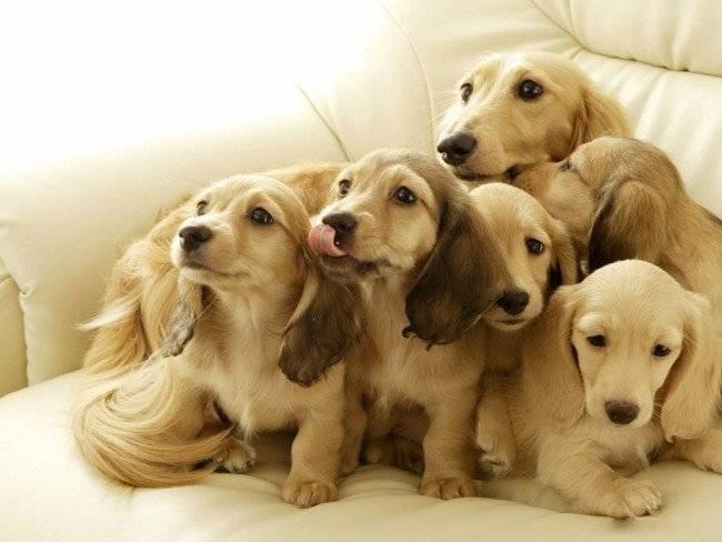 продолжительность жизни породистых собак
