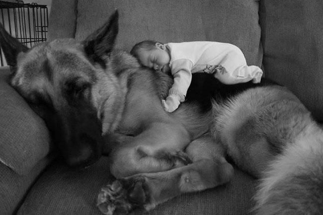 Зачем знать возраст собаки