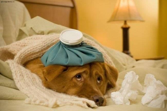 Когда нужно мерить температуру тела у собаки