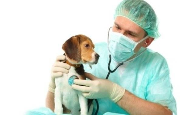 Лечение судорог у собак