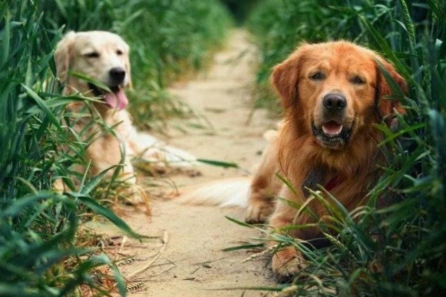Место для вязки собак