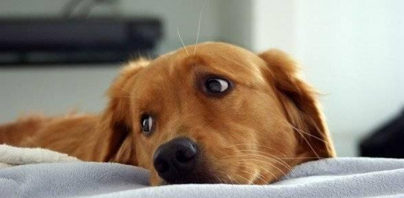 Признаки рвоты у собак