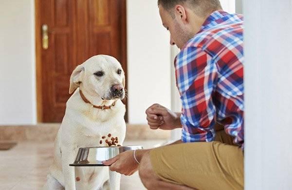 Рвота у собаки причины и лечение
