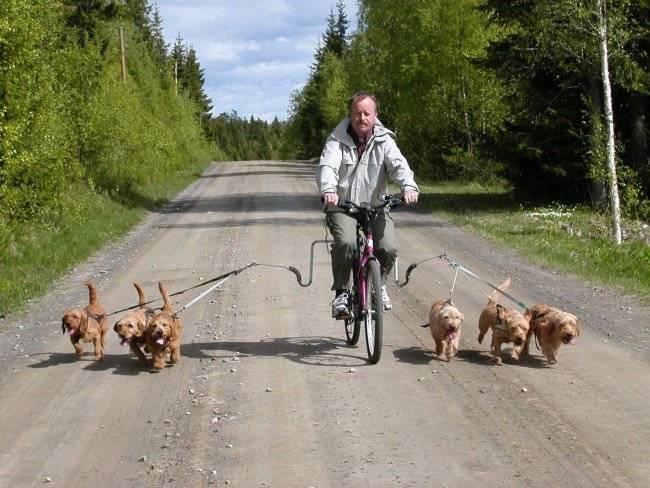 Шлейка для собак для выгула
