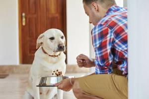 Причины рвоты у собак