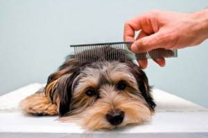 Корм для собак Роял Канин Чихуахуа| Обзор Корма Роял Канин