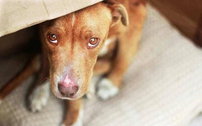 Методы воздействия на собаку