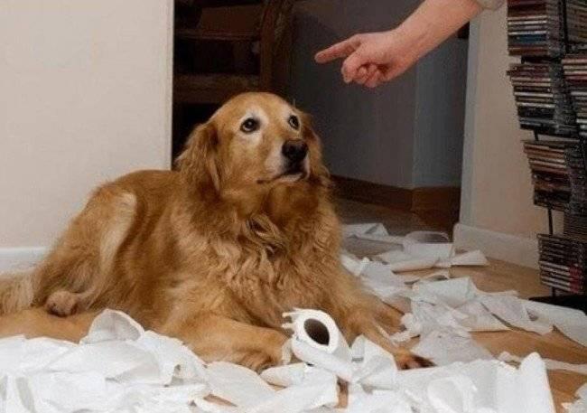 Показываем собаку свое превосходство
