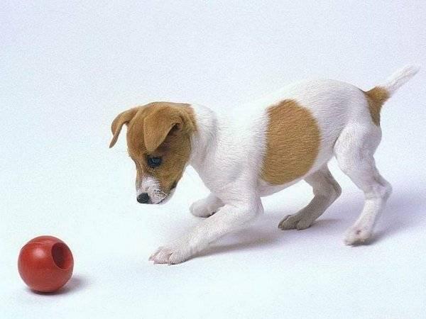 Причины по которым собака кусается