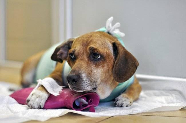 Средства против запоров у собак