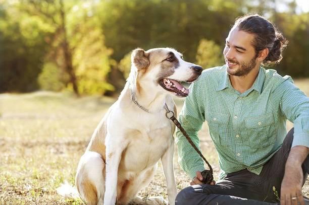 Влажный корм для собак отзывы