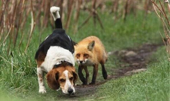 Пес охотится