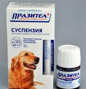 Празител от глистов для собак