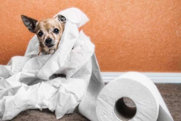 Признаки диареи у собак