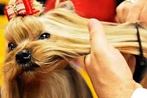 Профилактические меры от глистов у собак