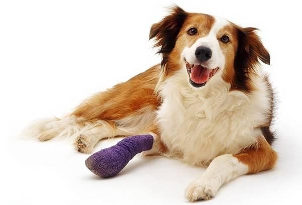Травма собаки