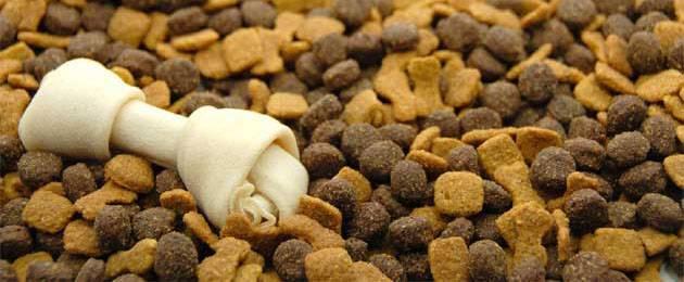 Чем кормить аляскинского маламута: правильный рацион питания в домашних условиях