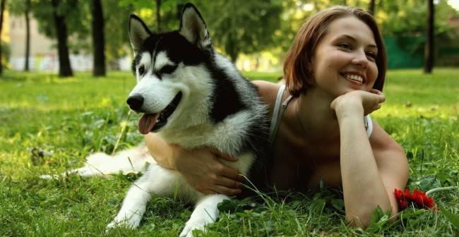 Отзывы владельцев собак о сухих кормах