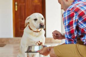 Собака не хочет есть, что делать