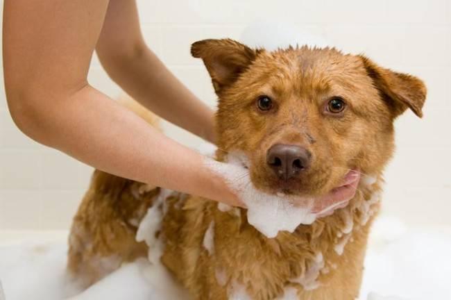 Шампуни от блох у собак