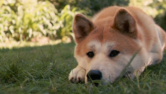 породистые собаки фото и цены