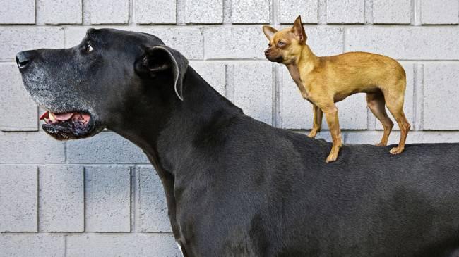 Размер собаки к чему снится собака