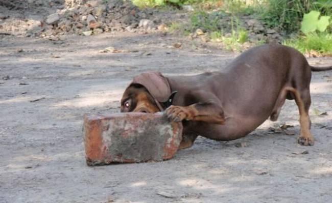 Признаки что собаке нужны витамины