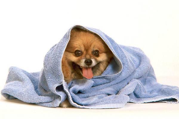 Грумминг мытье собаки
