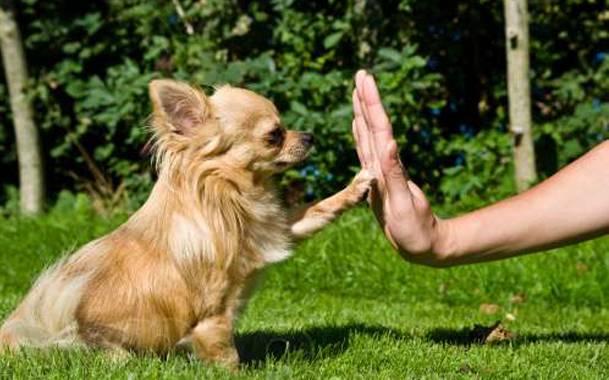 Команды необходимые для выгула собак