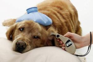 Сахарный диабет у собак