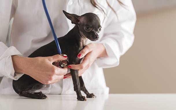 Собаки в группе риска анемии