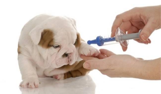 Лечение анемии у собак