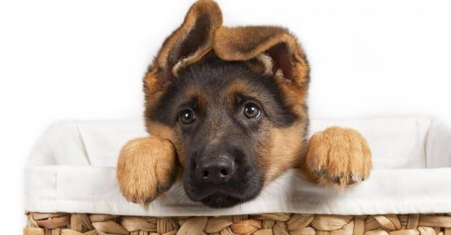Как воспитать щенка