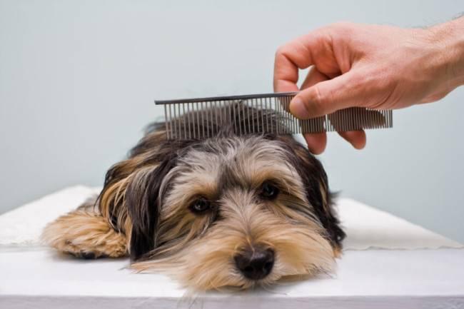 Как вычесывать собаку во время линьки