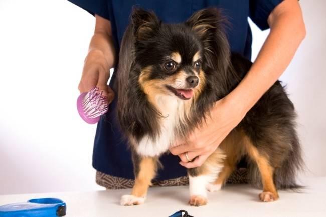 Уход за жесткой шерстью собак