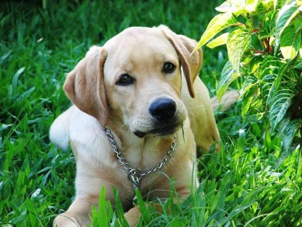 Симптомы отека легких у собак