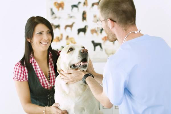 Лечение отравления собаки в клинике
