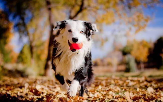 Основные правила воспитания щенков