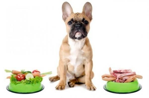Питание собаки при энтероколите