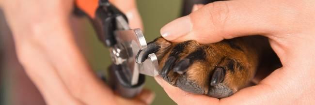 Грумминг стрижка когтей собаке