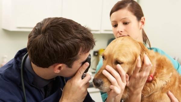 Прежде чем приниматься за лечение обязательно сходите к офтальмологу для уточнения диагноза