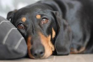Авитаминоз у собак симптомы
