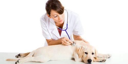 Диагностирование грибка у собак