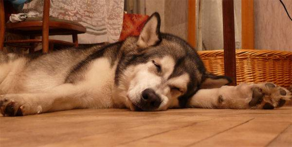 Симптомы грибка у собак