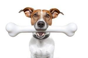 Можно ли давать собаке кости
